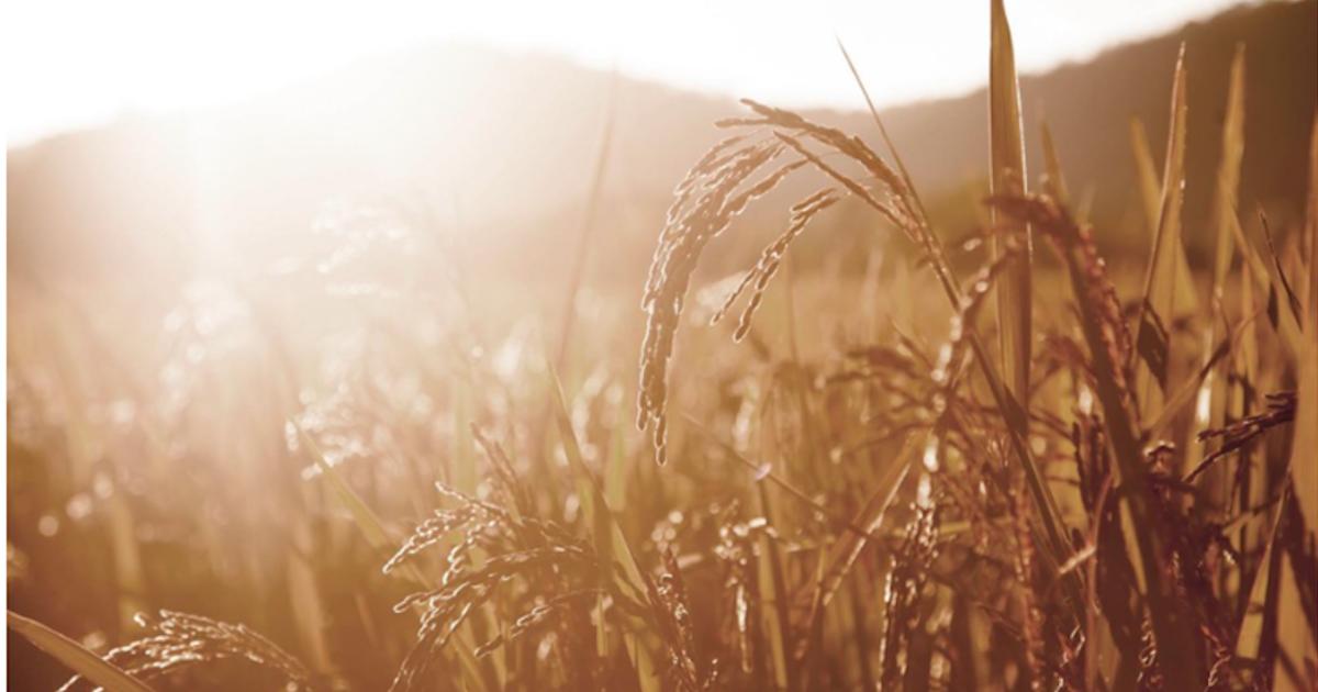 來自稻米王國的明星保養品米膚:敏感肌也愛的純天然