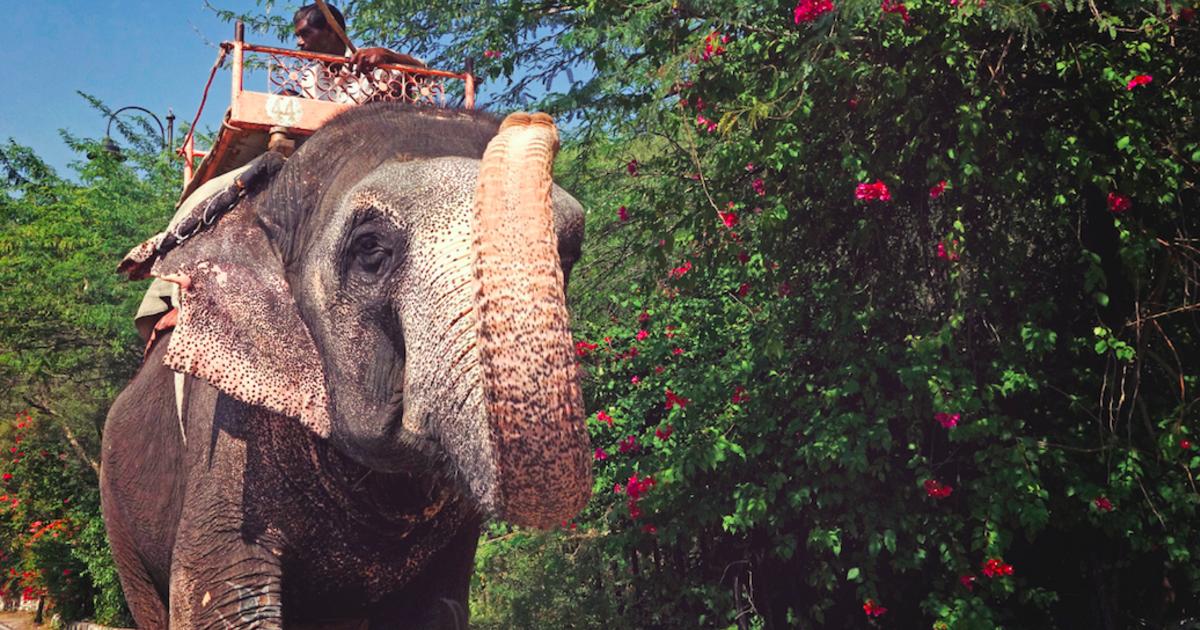 寫在一頭母象暴斃之後:為了服務人類而消失的動物權益