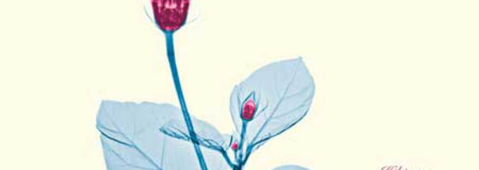 X光攝影學:晶瑩剔透的美麗花朵
