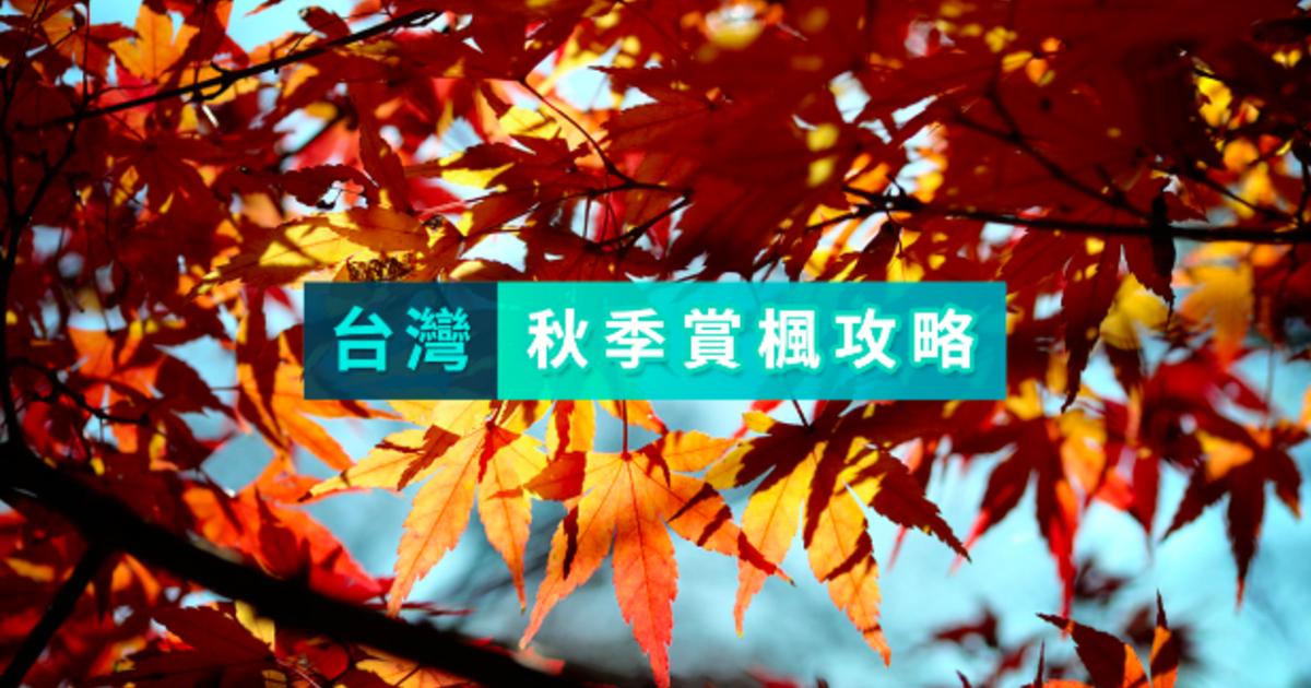 全台最美賞楓攻略:送自己一整片的秋葉