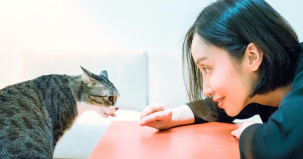 【葉佳怡專文】做一隻貓的道理