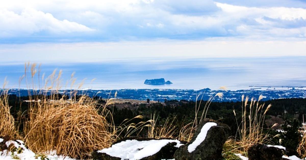 粉紅芒草、彩虹小學、山茶花之丘:年節散心就去濟州島