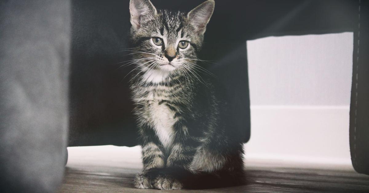Amazon 史上最暢銷貓咪飼育聖經:貓咪過世,主人怎麼辦