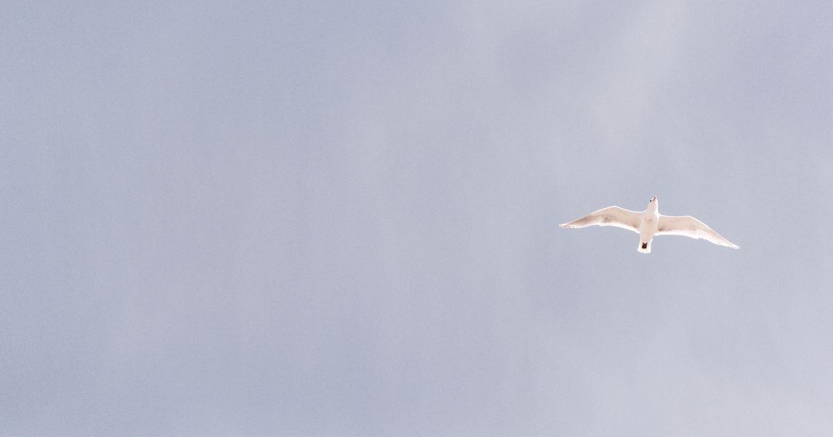 飛鳥與飛魚的愛情故事:放棄做自己,是最痛苦的事