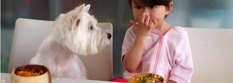 看了你都想吃!讓狗狗吃得好健康的四道料理