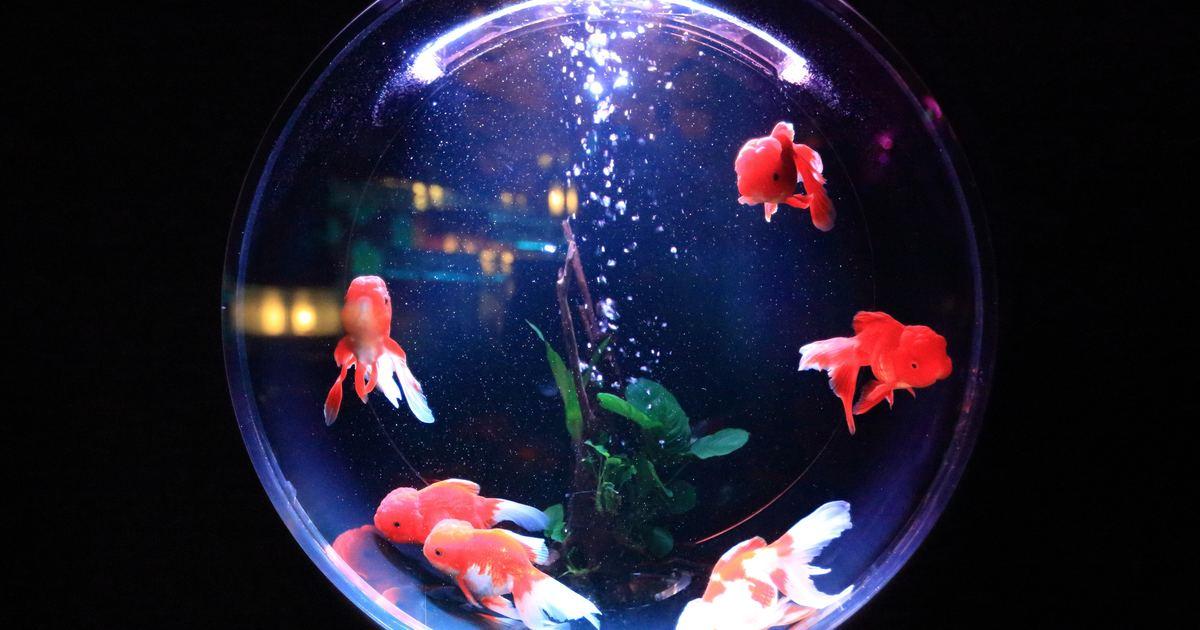 每個男人的心中都有一缸魚