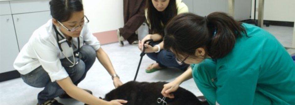 行動家:讓我們跟SPCA一起寵愛動物