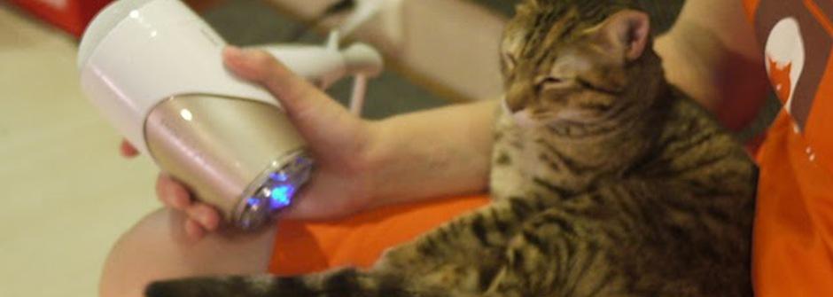 【communiCATion 我聽貓說的】貓咪不怕吹風