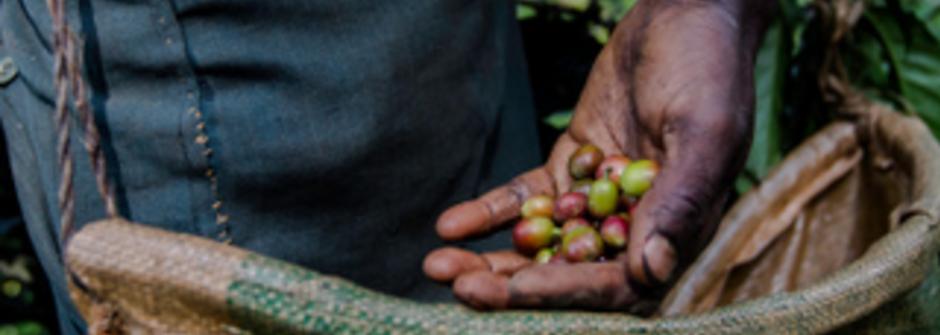 《咖啡癮史》咖啡豆與咖啡樹的偷渡故事|女人迷 Womany