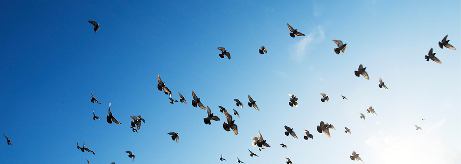 豁達地接受保育這堂課:每一個物種都有自己的生命故事