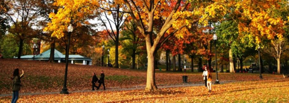 波士頓的秋天尾聲:橘色是最溫暖的顏色