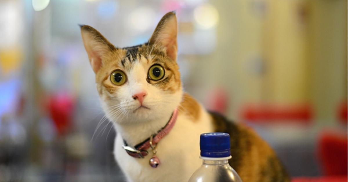 與貓共處的最好時光!四間超療癒貓咪咖啡店