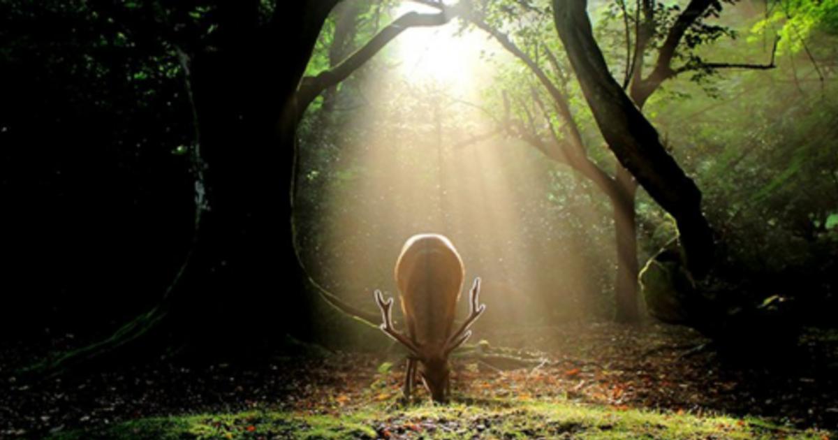 拍下日本最美的風景!年假出遊攝影聖經