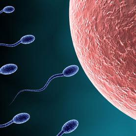 老鼠皮膚細胞能製造出精卵子