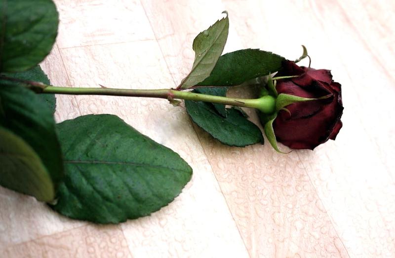 Rose_for_myself