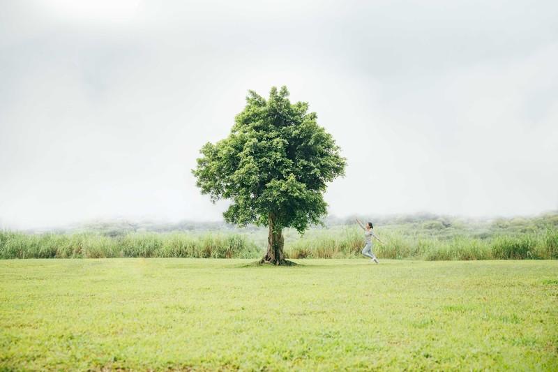 人類平均一年砍掉150 億棵樹:愛...